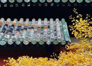 Ảnh chụp từ camera 60MP của Honor V30 lộ diện trước ngày ra mắt 26/11